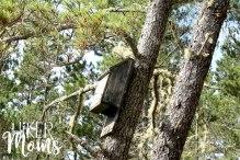 Clay Myers Trail at Whalen Island Park Cloverdale Oregon bird house Coastal Hikes Beautiful Beach fields for days