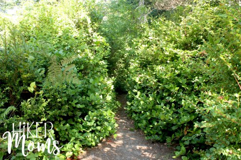 Clay Myers Trail at Whalen Island Park Cloverdale Oregon trees Coastal Hikes Beautiful Beach fields for days