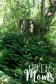 Maple Ridge Trail Estacada ORegon Milo McIver STate Park HIker Moms over grown ferns