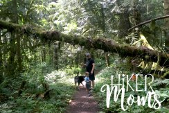 Maple Ridge Trail Estacada ORegon Milo McIver STate Park HIker Moms 2