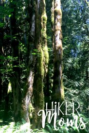 Maple Ridge Trail Estacada ORegon Milo McIver STate Park HIker Moms Large trees