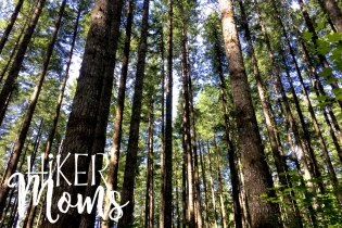 Hiker Moms Silver Falls State Park Silverton Sublimity Oregon Twin Falls Upper North Falls Middle North Falls Winter Falls hike Kids tall trees