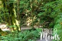 Hiker Moms Silver Falls State Park Silverton Sublimity Oregon Twin Falls Upper North Falls Middle North Falls Winter Falls hike Kids cute bridge