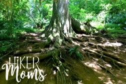 Hiker Moms Silver Falls State Park Silverton Sublimity Oregon Twin Falls Upper North Falls Middle North Falls Winter Falls hike Kids large tree root