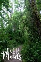 Virginia Lake Sauvie Island Portland Oregon Hiker Moms Hike Oregon Hiking kids trail feature old growth