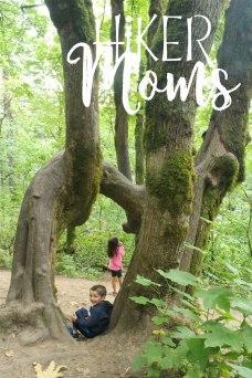 Latourell Falls Portland Oregon Hiker Moms Sign Salem Hike water falls waterfalls funky tree