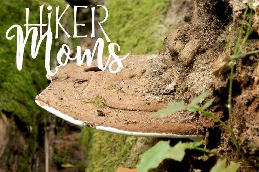 Latourell Falls Portland Oregon Hiker Moms Sign Salem Hike mushroom