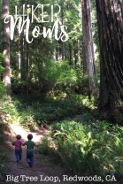 Big Tree Loop, Redwoods, California Image 6 trail boys