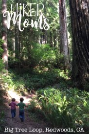 Big Tree Loop, Redwoods, California Image 6 trail boys
