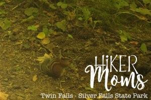 Hiker Moms, Silver Falls, Chipmunks, Waterfalls, Smooth Path, Tree Roots, State Park, Trail of ten falls, 10, Falls, Oregon, Salem, Silverton, River, Rocks, Beautiful, Hike