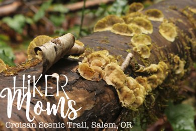 Croisan Scenic Trail, Salem, Oregon, HikerMoms, Easy, Hikes, kids, Strollers, Mushrooms, worms