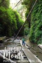 Fern Canyon California, Redwoods, California, CA, Kids, Hike, hiking 3