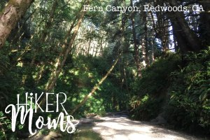 Fern Canyon California, Redwoods, California, CA, Kids, Hike, hiking 2