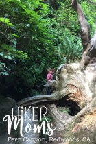 Fern Canyon California, Redwoods, California, CA, Kids, Hike, hiking 1
