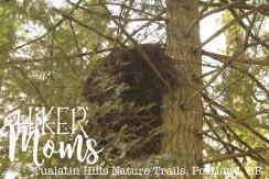 Tualatin Hills Nature Park, Portland, Beaverton, Large Nest, Oregon, Cedar Hills, Ponds, Ducks, trails, boardwalk, running, walking, ADA Accessible