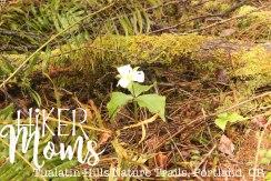Tualatin Hills Nature Park, Portland, Beaverton, Flower, Oregon, Cedar Hills, Ponds, Ducks, trails, boardwalk, running, walking, ADA Accessible