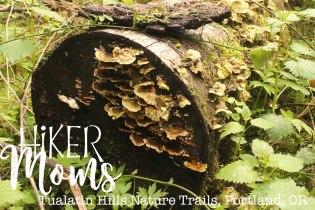 Tualatin Hills Nature Park, Portland, Beaverton, Mushrooms, Oregon, Cedar Hills, Ponds, Ducks, trails, boardwalk, running, walking, ADA Accessible