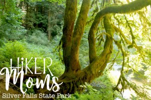 Hiker Moms, Silver Falls, Amazing Trees, Waterfalls, Smooth Path, Tree Roots, State Park, Trail of ten falls, 10, Falls, Oregon, Salem, Silverton, River, Rocks, Beautiful, Hike