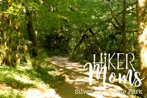 Hiker Moms, Silver Falls, Canopy of Trees, Smooth Path, Tree Roots, State Park, Trail of ten falls, 10, Falls, Oregon, Salem, Silverton, River, Rocks, Beautiful, Hike
