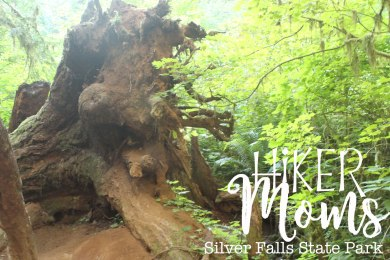 Hiker Moms, Silver Falls, Another Tree Root, Waterfalls, Smooth Path, Tree Roots, State Park, Trail of ten falls, 10, Falls, Oregon, Salem, Silverton, River, Rocks, Beautiful, Hike