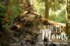Hiker Moms, Silver Falls, Tree Roots, State Park, Trail of ten falls, 10, Falls, Oregon, Salem, Silverton, River, Rocks, Beautiful, Hike