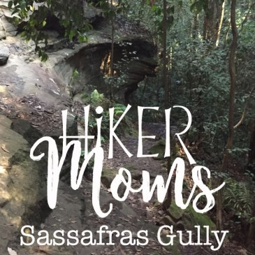 Sassafras Gully, Springwood, Australia, New South Wales, Hike, Mom, Babywearing, HikerMOms