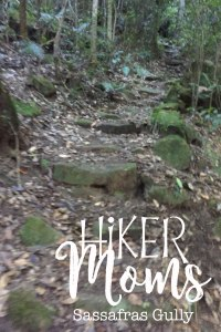 Sassafras Gully, HIkerMoms, Springwood, Rock, Path, Australia, New South Wales, Hike, Moms, Kids, Babywearing, Map