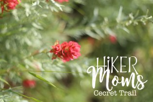 Cecret Lake Trail, Salt Lake City, Flowers, Scenery, Group Trip, Cottonwood Canyon, Hike, Backpack, Carrier, Infants, Hikermoms, Hiking, Trails, Group, Family, Kids, Mom, Dad